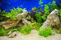 Aquarium decoration and small fish Royalty Free Stock Photos
