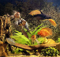 Aquarium different fishes swimming in an on a scenery of aquatic plant and air bubles Royalty Free Stock Photography