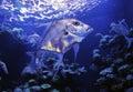 Aquarium 032 Royalty Free Stock Photo
