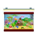 Aquarium fish, seaweed underwater, marine animal isolated on white Royalty Free Stock Photo