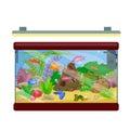 Aquarium fish, seaweed underwater with marine animal  on white Royalty Free Stock Photo