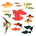 Aquarium fishes Royalty Free Stock Image