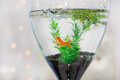 Aquarium with gold fish as modern wedding table decoration Royalty Free Stock Images