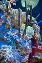 Aquarium inside the park overseas rimini with corals Royalty Free Stock Photos