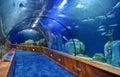 Glass tunnel in Oceanografic aquarium Royalty Free Stock Photo
