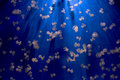 Aquarium jellyfish in the deep blue background Royalty Free Stock Photos