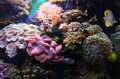 Aquarium life colorful with bright fishes Royalty Free Stock Photography