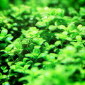 Aquarium plants Royalty Free Stock Photos