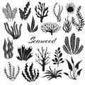 Aquarium seaweeds. Underwater plants, ocean planting. Vector seaweed black silhouette isolated set