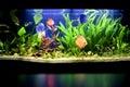 Fish in tropical aquarium Royalty Free Stock Photo