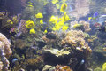Aquarium tank bright colored fish and coral in Royalty Free Stock Photos