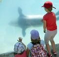 Aquarium visit children watch sea lion in an Royalty Free Stock Image