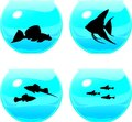 Aquariums four with different aquarium fish Royalty Free Stock Photos