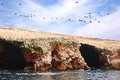 Aquatic birds at paracas national reservation or the peruvian galapagos at the reserve there are the islas ballestas islands which Royalty Free Stock Images