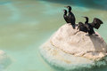 Aquatic birds on a rock exotic standing oceanographic of the city of arts and sciences in valencia spain Stock Images
