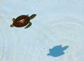 Aquatic turtle a baby in the water Stock Photography