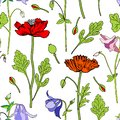 Aquilegia flower, red Poppy, leaf hand drawn vector botanical illustration isolated on white background, Seamless floral Royalty Free Stock Photo
