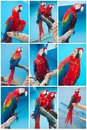 Ara parrots beautiful photos of tropical macao or scarlet macaw Stock Images
