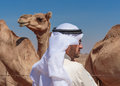 Arab men and camels man on the farm Stock Images