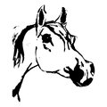Arabian horse, horse (Arab, head). Drawing by hand. Royalty Free Stock Photo