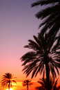 Arabian sunset vertical Royalty Free Stock Photography