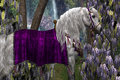 Arabian and wisteria portrait of a white stallion in fancy saddle bridle with purple flowers in the background Stock Photos