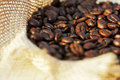 Arabica coffee in a linen bag on a plantation Royalty Free Stock Photography