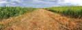 Arable field panorama Royalty Free Stock Photo