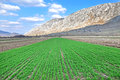 Arable field at spring corn with a mountain in the back Royalty Free Stock Images