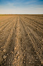 Arable land agricultural under the blue sky Stock Photo