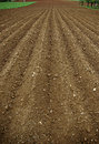 Arable land the furrows in the field of ready for spring planting Royalty Free Stock Photo