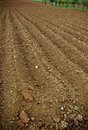 Arable land the furrows in the field of ready for spring planting Royalty Free Stock Photos