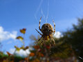 Arachnid sitting in his web Royalty Free Stock Photo
