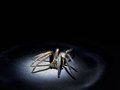 Arachnophobia concept large hairy spider in spotlight macro real real torchlight hence harsh lighting and specular highlights Royalty Free Stock Images