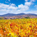 Aragon Paniza autumn golden red vineyard in Zaragoza Stock Photo