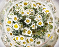 Arangement with daisy flowers in the glass bowl, birthday gift Royalty Free Stock Photo