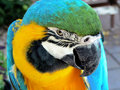 Arara bird Royalty Free Stock Photography