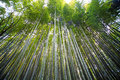 Arashiyama bamboo forest trails kyoto japan Royalty Free Stock Image