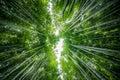 Arashiyama bamboo grove the of kyoto japan Stock Photos