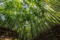 Arashiyama the famous bamboo footpath at kyoto japan photo taken on april th Royalty Free Stock Images