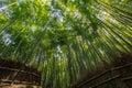 Arashiyama the famous bamboo footpath at kyoto japan photo taken on april th Royalty Free Stock Images