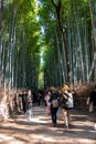 stock image of  Tourist walking in Bamboo Forest