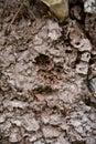 Arboreal termite nest Royalty Free Stock Photo