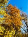 Arbre d automne Image libre de droits