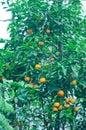 Arbre orange dans un jardin botanique Photographie stock libre de droits