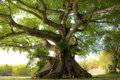 Arbre paisible Images libres de droits