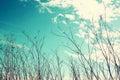 Arbre sec contre le ciel bleu l image est rétro filtrée Photographie stock