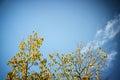 Arbre sec contre le ciel bleu l image est rétro filtrée Image stock