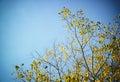 Arbre sec contre le ciel bleu l image est rétro filtrée Photos libres de droits