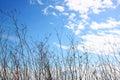 Arbre sec contre le ciel bleu l image est rétro filtrée Image libre de droits